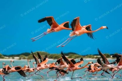 Flamingos at las Coloradas