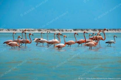 Tour to see Flamingo, from playa del carmen and cancun