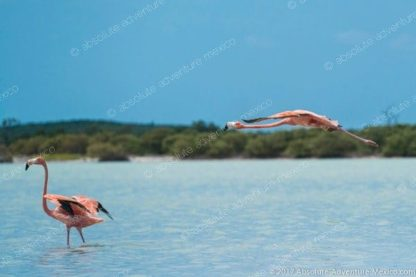 flamingos during ou tour