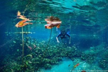 crystal clear water in cenote