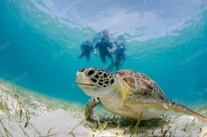 Swimming with turtle in akumal