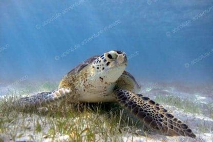 turtle tour in akumal bay
