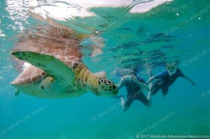 Snorkeling tour with turtles