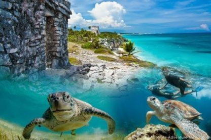 tulum ruins and snorkeling in akumal with turtles