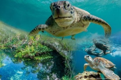 turtles and cenote tour in akumal